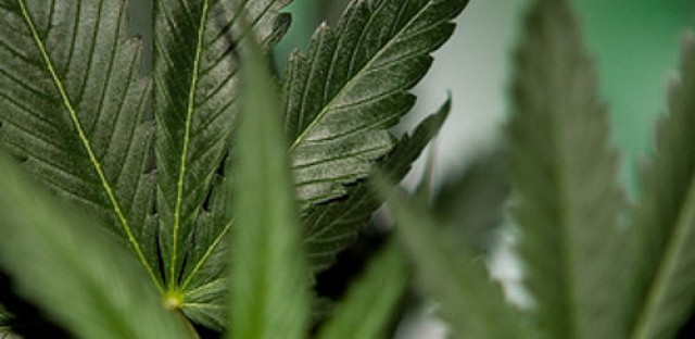 Eat This! Author offers connection between marijuana and weight loss