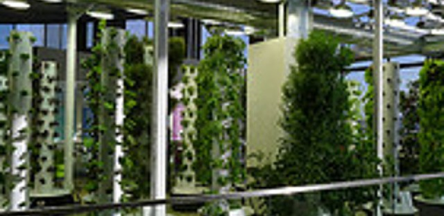 Chicago vertical farming company Farmed Here talks new methods