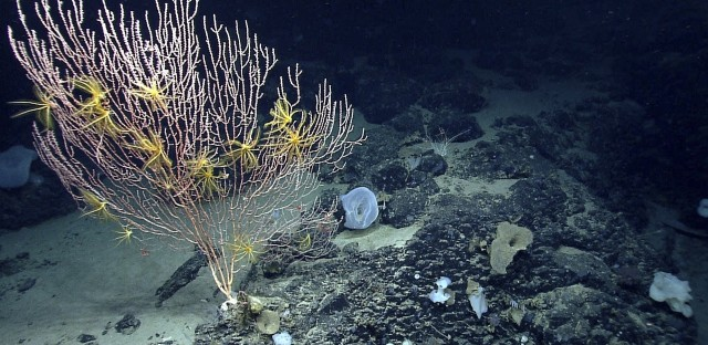 The first national marine monument in the Atlantic is designed to permanently protect nearly 5,000 square miles of underwater canyons and mountains off the coast of New England.