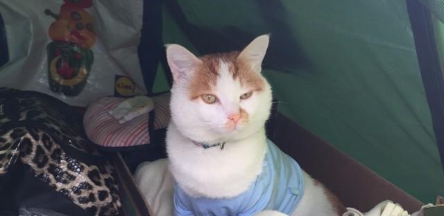 Taboosh, the cat