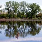 Solar pump moistens marsh to beckon rare birds