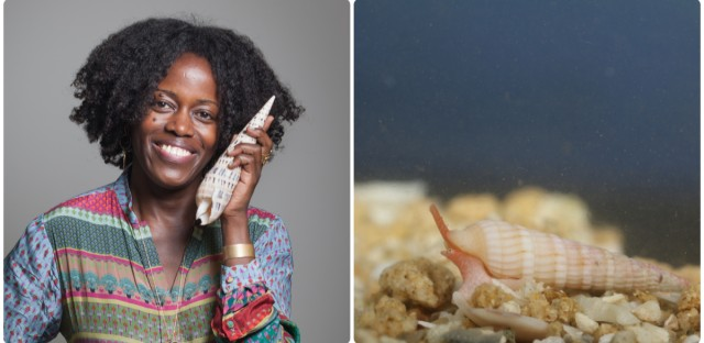 Mandë Holford searches for deadly sea snails and harvests their venom in her lab. Peptides in snail venom can be used to treat pain and slow the growth of cancerous liver tumors. (Left: Photo by Denis Finnin/American Museum of Natural History; Right: Pierre Laurent/Courtesy of Mandë Holford)