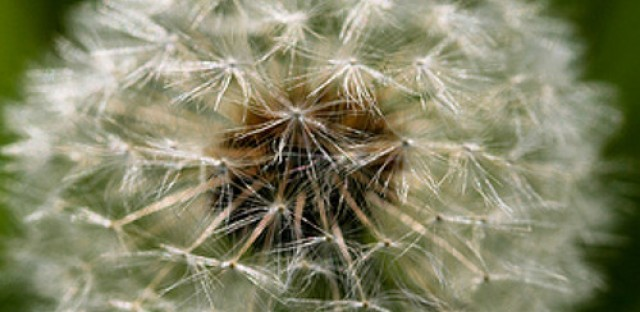 Allergist offers tips for upcoming seasonal change