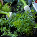 Two Green Thumbs Up: Digging Into Your Gardening Questions