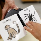 Images of animals and insects used for instruction in special education classes.