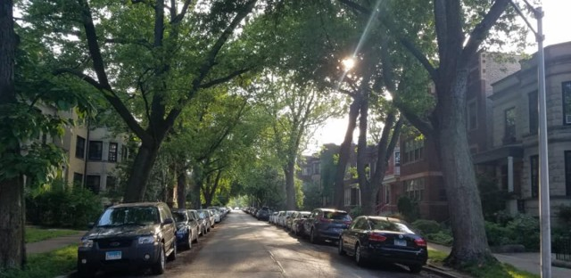 Aldermen have responded to calls to help save tree-lined streets, like this one in Andersonville, from mass tree removal. This week they introduced an ordinance that would require the city to study less disruptive water infrastructure repair methods.