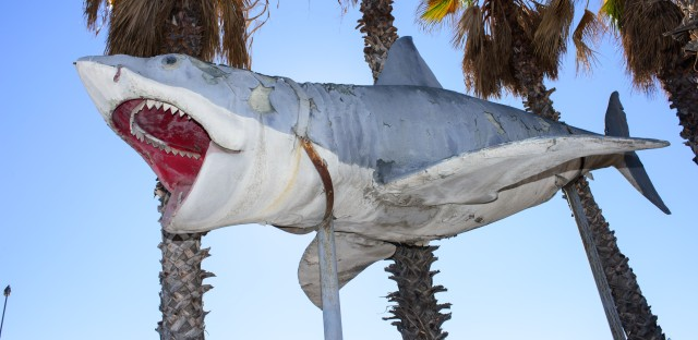 The Academy Museum has accepted into its collection the sole surviving full-scale model of the 1975 <em>Jaws</em> shark, donated by Nathan Adlen.