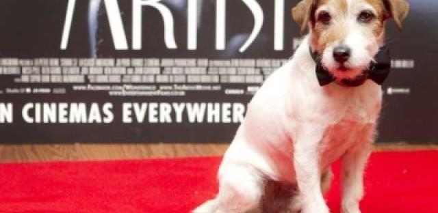Academy Awards snub the animal kingdom