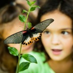 kids and butterflies and nature