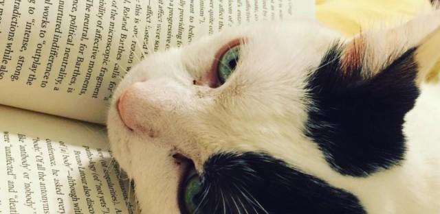 April's cat, Leo is taking in some dense reading.