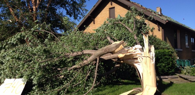 One of thousands of trees destroyed throughout Coal City during the EF-3 tornado where winds reached 160 miles per hour.