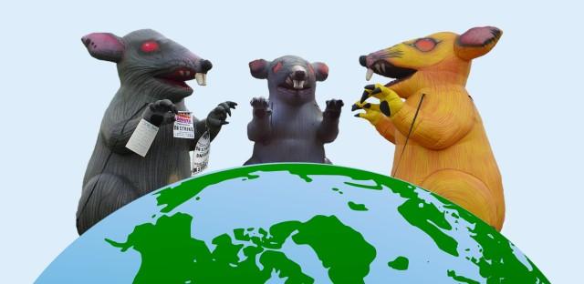 Rat Balloons Updated Thumbnail