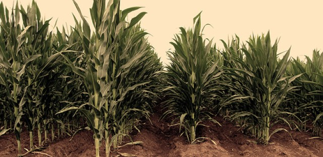 Drought's effect on crop prices has food advocates worried