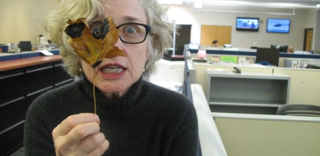 Senior editor Cate Cahan investigates a suspect maple leaf