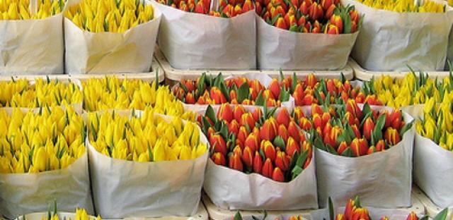 World History Minute: Tulip mania (Feb. 5, 1637)