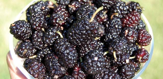 Bowlful of mulberries