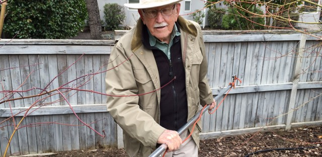 Jim Shute, 95 and still wielding the pole saw.
