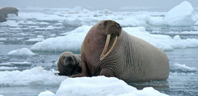 Ominous signs for climate change in the Arctic