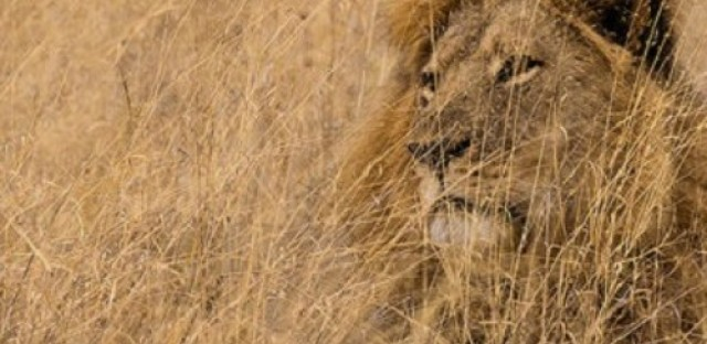 Cecil the Lion, racism in the DR, the legacy of Hiroshima, and Genesis at the Crossroads